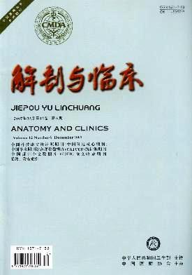 解剖与临床
